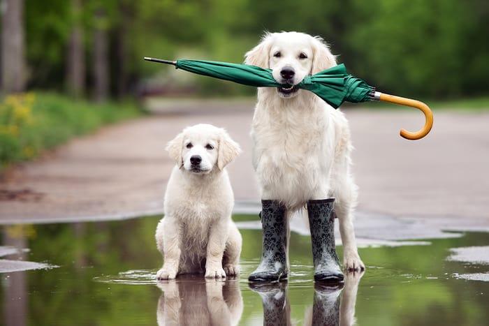 Starco insurance flood insurance